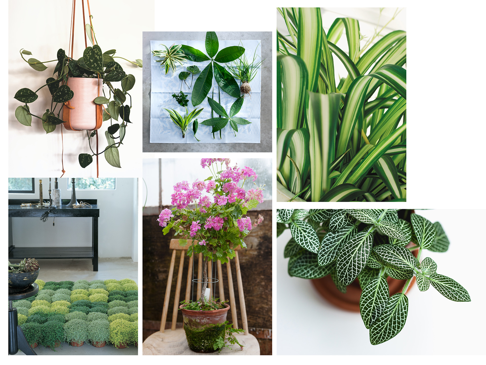Garden Trends I Craft of Nature I växter inomhus.jpg