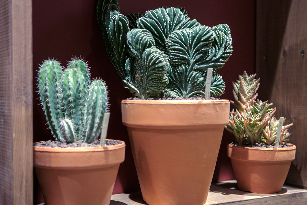 elmia-garden-trends-succulents-paris.jpg